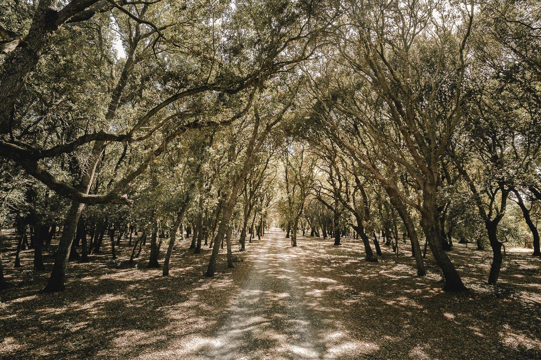 Finca Binissati. Mallorca. Camino de acceso bajo árboles en día soleado