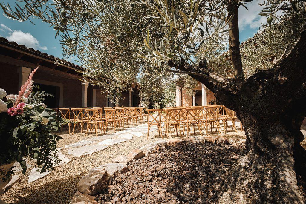 Zona ceremonia y olivo.