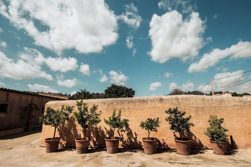 Plantas decorativas junto a muro exterior.